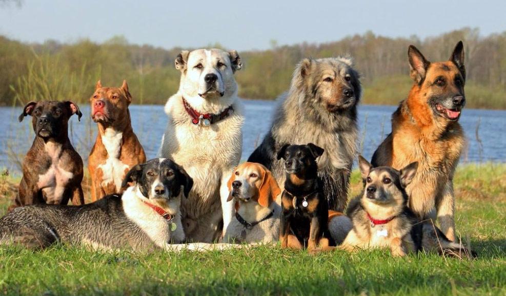 Вольер можно обустроить для любой собаки
